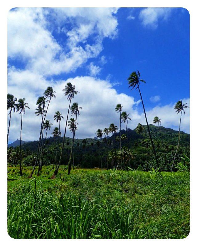 palmbomen tropisch