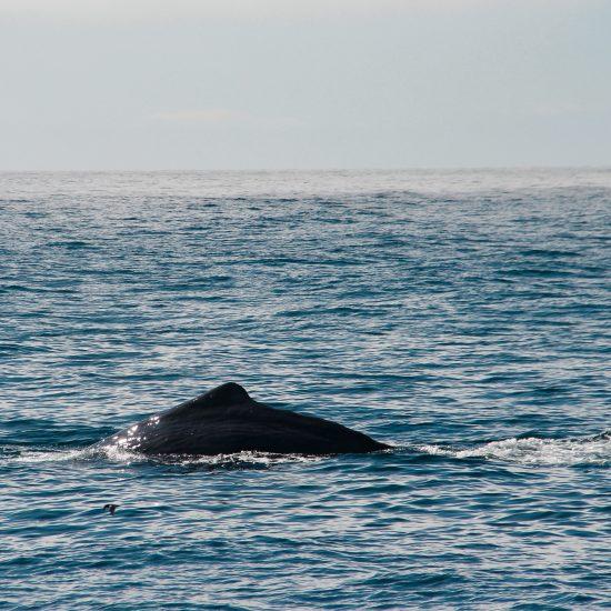 kaikoura walvis