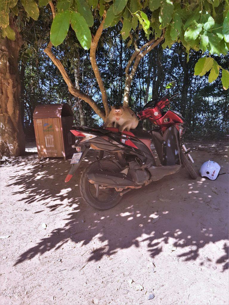 Angkor wat scooter
