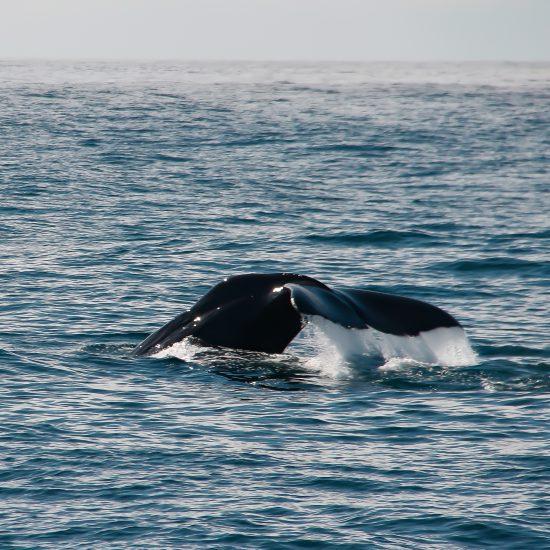 reisfotografie walvis