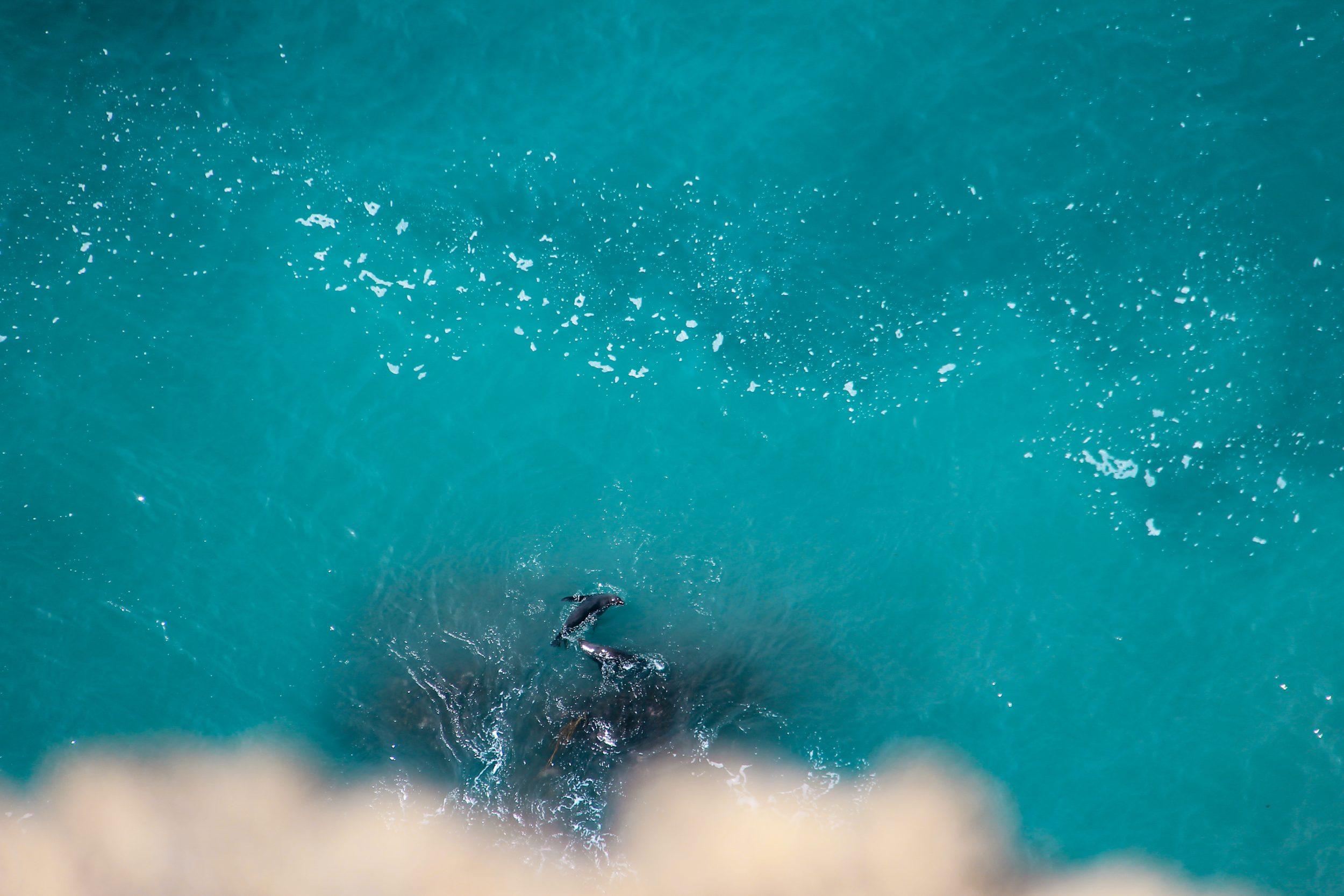 Zeeleeuwen Nieuw ZeelandZeeleeuwen Nieuw Zeeland