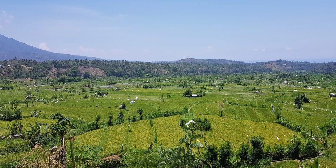 rijstvelden bij sidemen