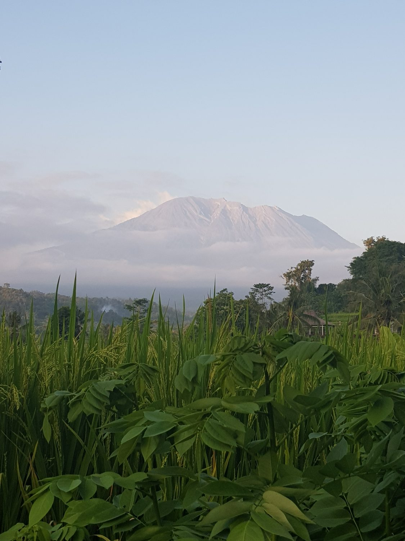 rijstvelden mount agung vulkaan