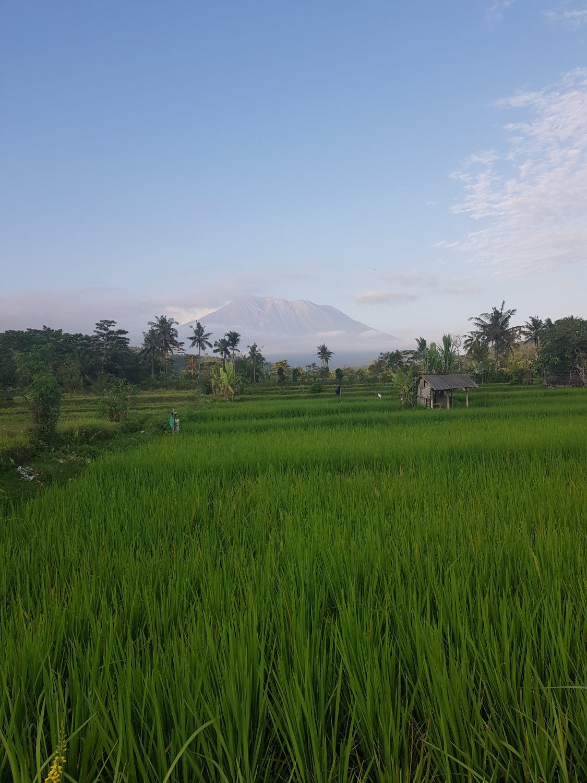 rijstvelden sidemen bali