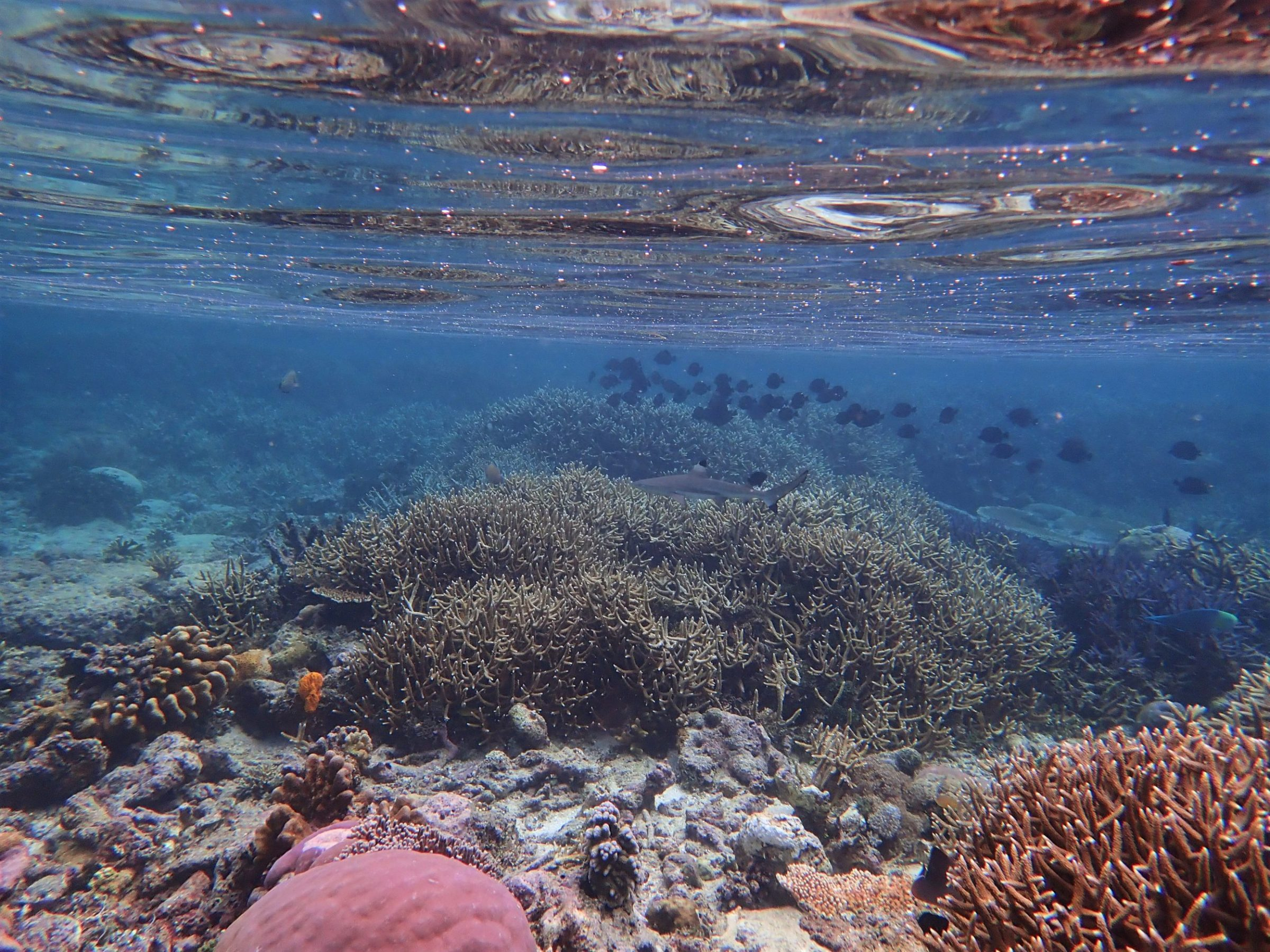 koraalrif raja ampat