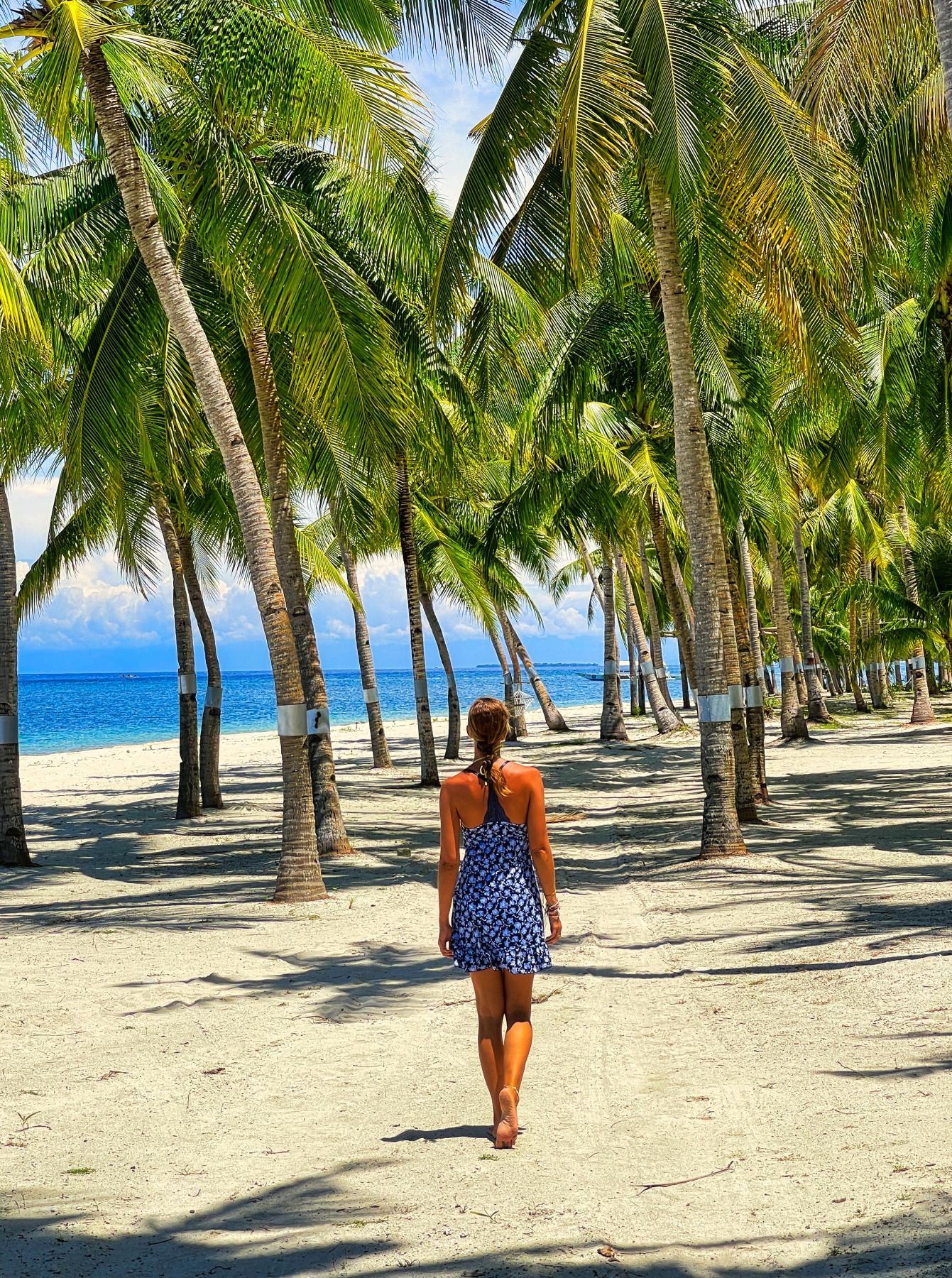 palmbomen siquijor