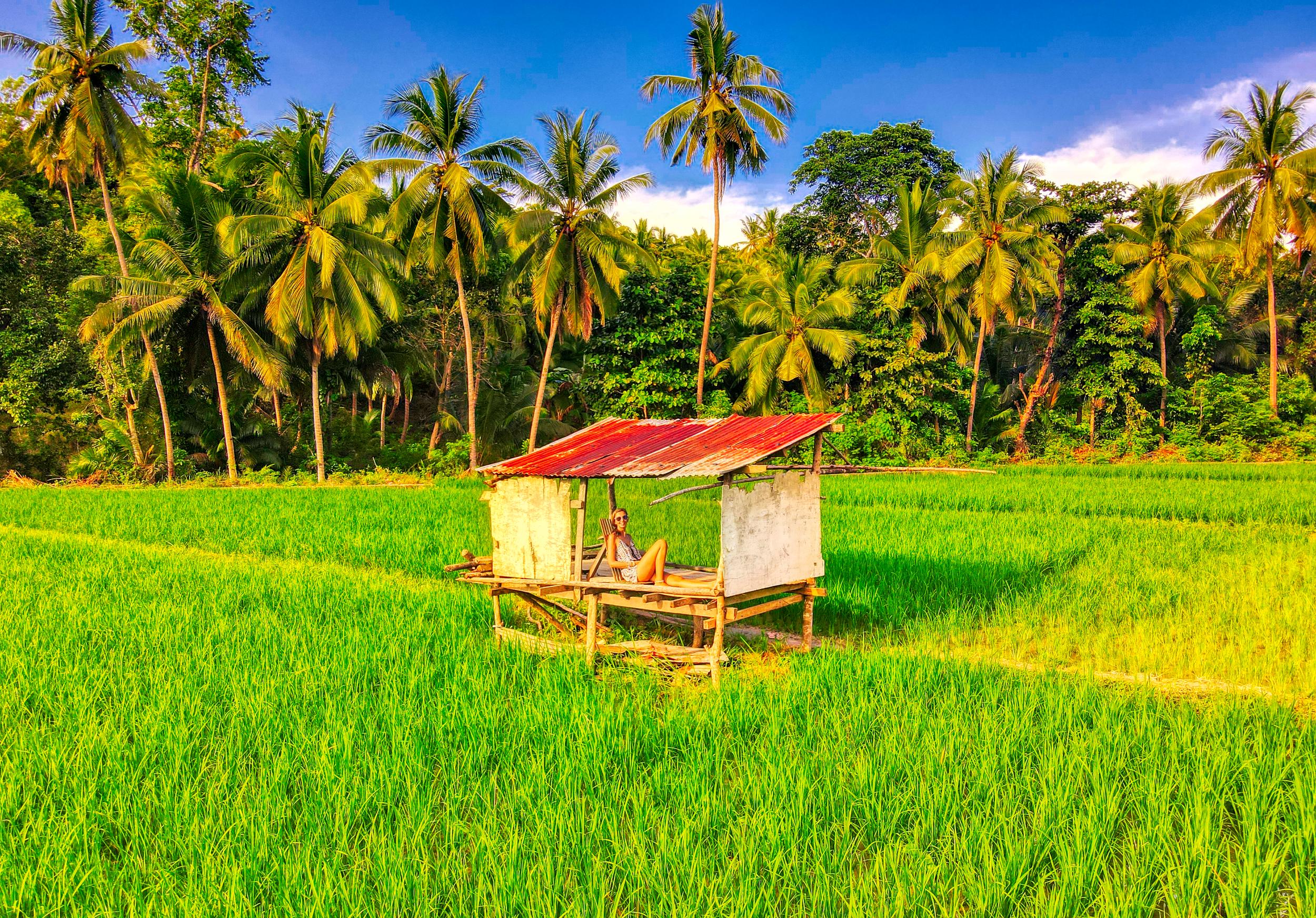rijstveld filipijnen