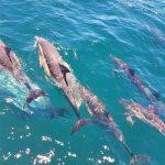 dolfijnen Australië