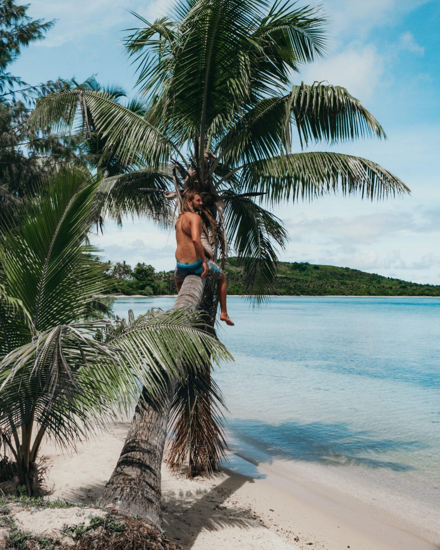 palmboom reizen